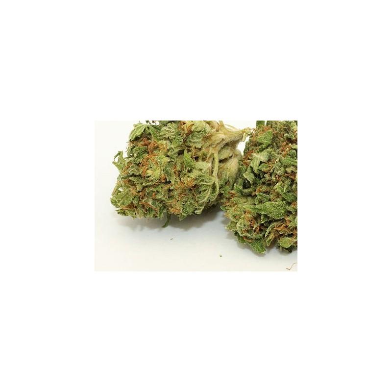 Cannabis cbd growshop sodium geneve vente achat tabac for Livraison fleurs geneve