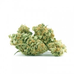 Greengarden Double G 1,5gr.